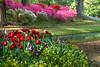 Spring Flowers 3<br /> <br /> (C) J.L. McPhail Photography, Spotlightpicture.com