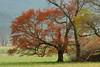 Cades Cove Tree 3<br /> (C) J.L. McPhail Photography, Spotlightpicture.com