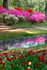 Spring Flowers 2<br /> <br /> (C) J.L. McPhail Photography, Spotlightpicture.com