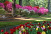 Spring Flowers<br /> <br /> (C) J.L. McPhail Photography, Spotlightpicture.com