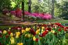 Spring Flowers 4<br /> <br /> (C) J.L. McPhail Photography, Spotlightpicture.com