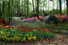 Spring Flowers 5<br /> <br /> (C) J.L. McPhail Photography, Spotlightpicture.com