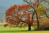 Cades Cove Tree 2<br /> <br /> (C) J.L. McPhail Photography, Spotlightpicture.com