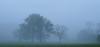 Cades Cove foggy trees