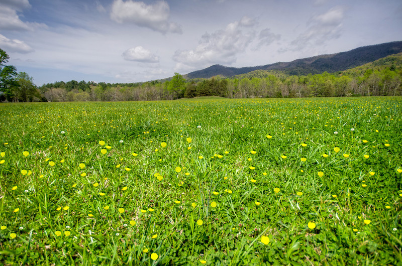 Cades Cove in the Spring