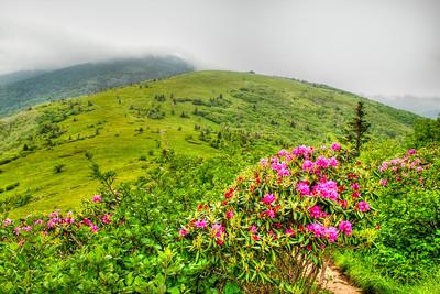 Roan Mountain Highlands - North Carolina/TN Border