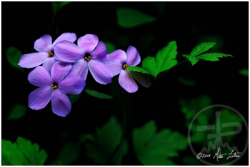 Chloe's Flowers