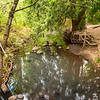2021-08-08 3-Creeks Natural Area-21