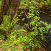 2021-08-08 3-Creeks Natural Area-10