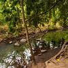 2021-08-08 3-Creeks Natural Area-17