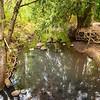 2021-08-08 3-Creeks Natural Area-23