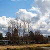2021-03-06 Boardman Wetlands-13