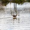 2021-03-06 Boardman Wetlands-72