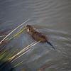 2021-03-06 Boardman Wetlands-4