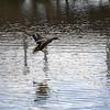 2021-03-06 Boardman Wetlands-70-2