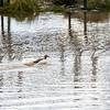 2021-03-06 Boardman Wetlands-73