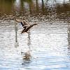 2021-03-06 Boardman Wetlands-70