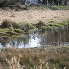 2021-03-06 Boardman Wetlands-9-2