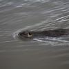 2021-03-06 Boardman Wetlands-60-2