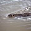 2021-03-06 Boardman Wetlands-60