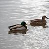 2021-03-06 Boardman Wetlands-69