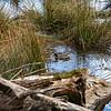 2021-03-06 Boardman Wetlands-47