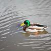 2021-03-06 Boardman Wetlands-5