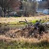 2021-03-06 Boardman Wetlands-7