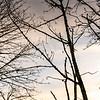 2021-03-04 Kronberg Park-22