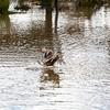 2021-03-06 Boardman Wetlands-71