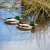 2021-03-06 Boardman Wetlands-49
