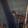 2021-03-06 Boardman Wetlands-3