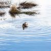 2021-03-06 Boardman Wetlands-45
