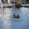2021-03-06 Boardman Wetlands-46
