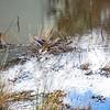 2021-03-06 Boardman Wetlands-50