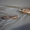 2021-03-06 Boardman Wetlands-1