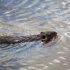 2021-03-06 Boardman Wetlands-66