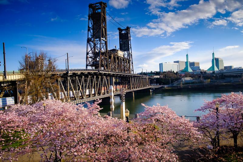 2020-03-15 Cherry Blossoms Walk-23