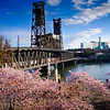 2020-03-15 Cherry Blossoms Walk-23