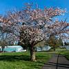 2021-03-27 Westmoreland Park-33