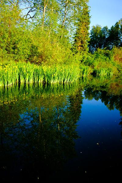 Whitaker Pond 050617-8
