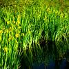 Whitaker Pond 050617-14