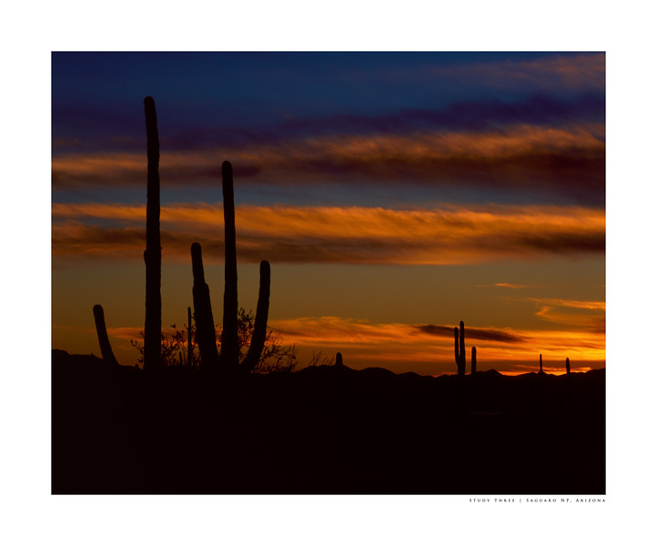 Study Three | Saguaro NP, Arizona