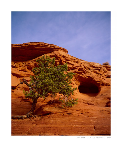The Lone Tree | Canyonlands NP, Utah
