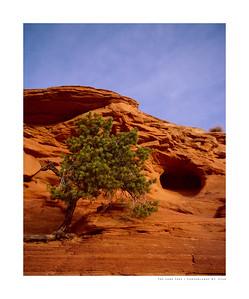 The Lone Tree   Canyonlands NP, Utah