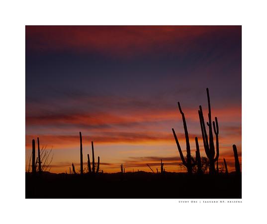 Study One   Saguaro NP, Arizona