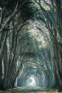 Tree Tunnel, CA