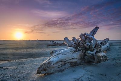 Driftwood Sunrise