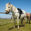 Horses of Inishbofin