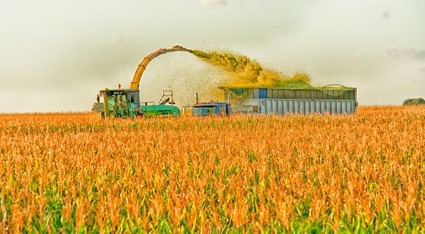 harvest-524-Edit